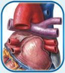 лечение приобретенного порока сердца