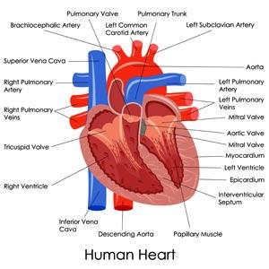 лечение врожденного порока сердца