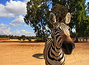 Зоологические парки
